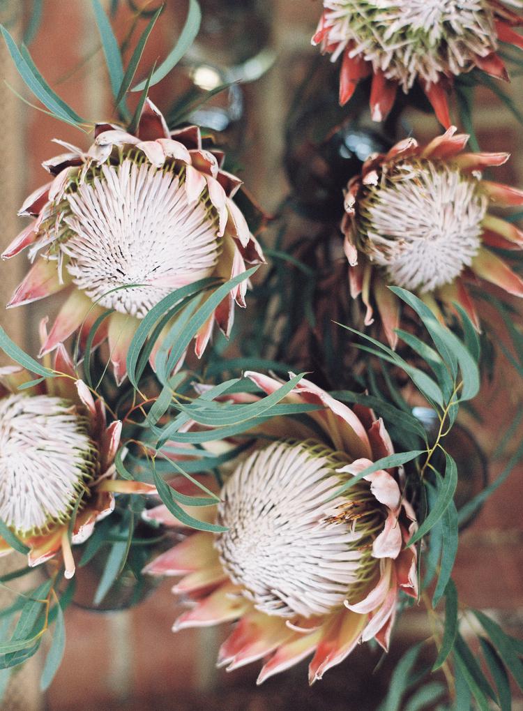 protea.jpg