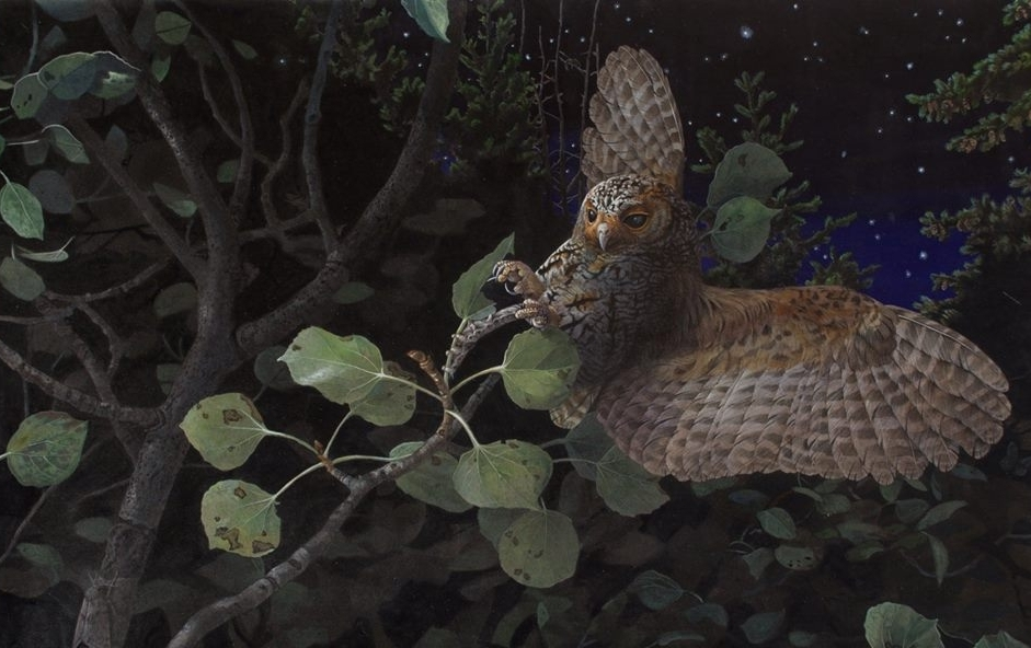 SALLY GLEANING FLAMMULATED OWL