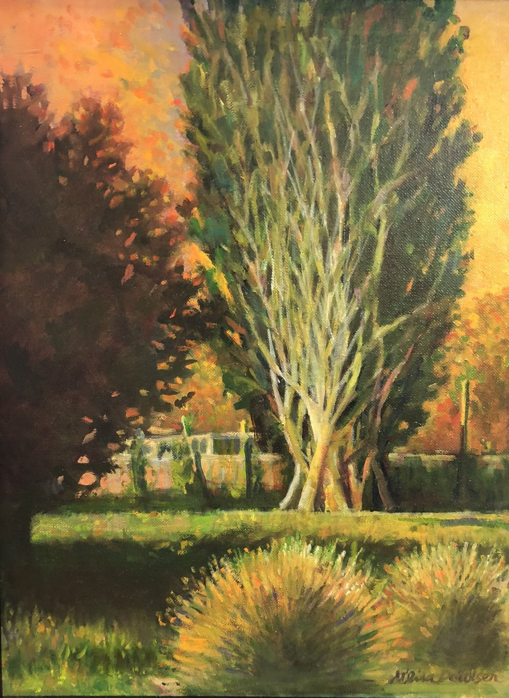 Spring City Poplar
