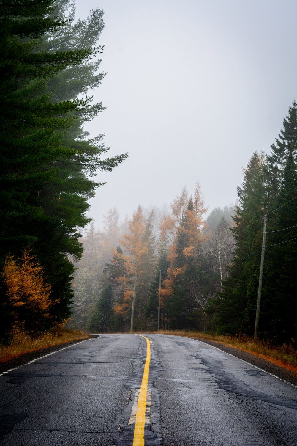 Route 8 in fog and fall colour, outside Fredericton.  Buy Print