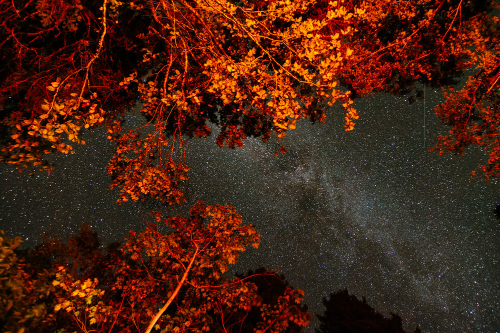 The Milky Way looms large over a canopy of campfire-lit trees in Fundy National Park.  Buy Print