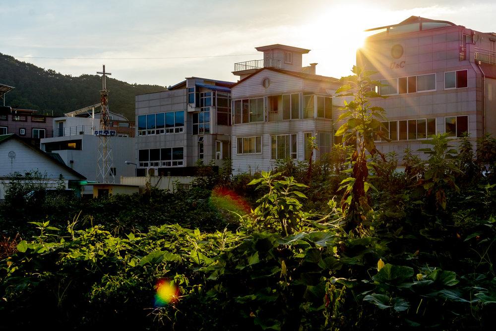 A garden grows in evening light in Geumho 2-dong, Gwangju.