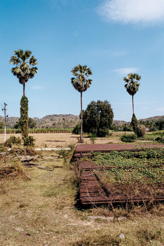 Trees stand above unused rail line outside. Kanchanaburi.