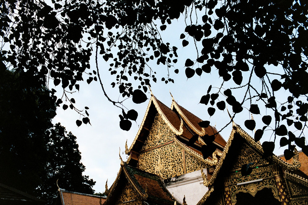 Evening light catches the gold facade of Wat Phra That Doi Suthep, which overlooks Chiang Mai.