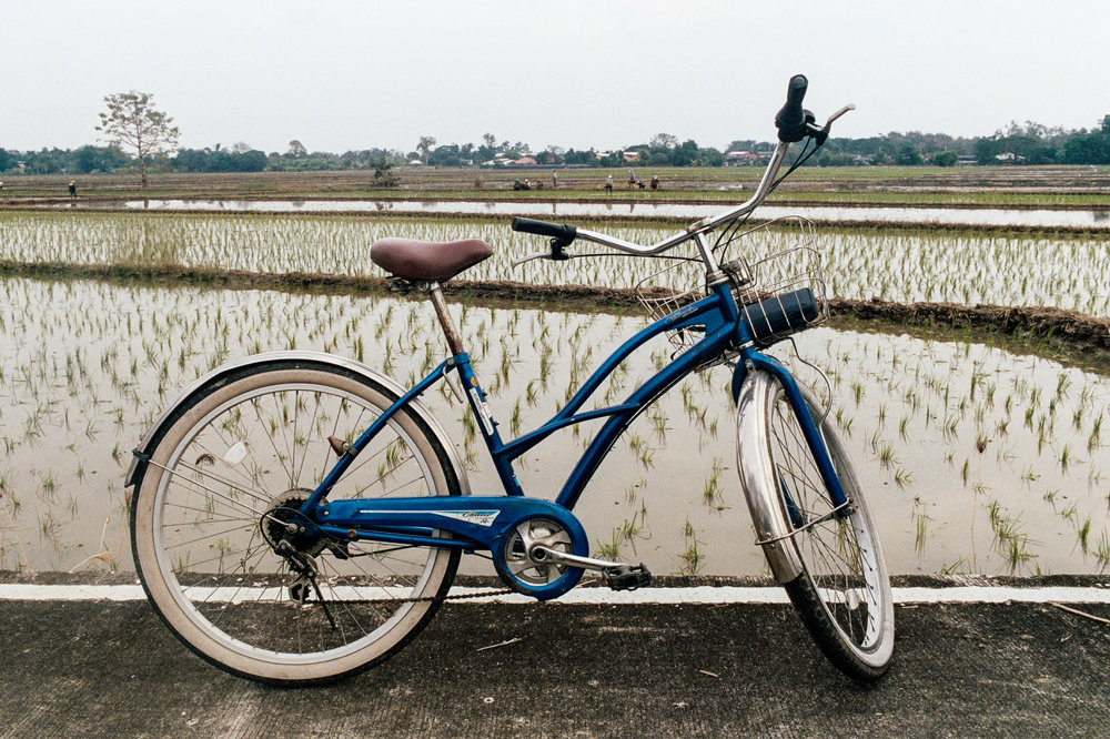Seeing rural Chiang Mai by bike is highly recomended.