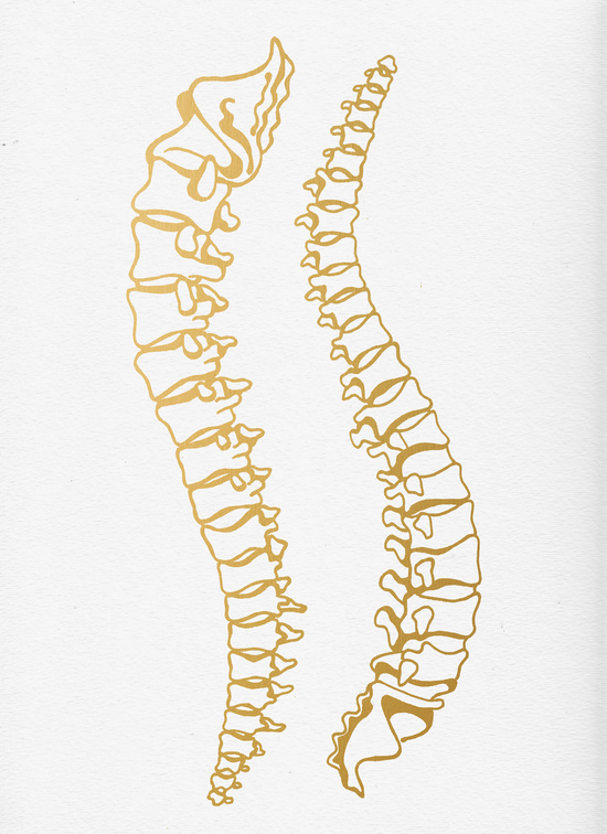 Gold Vertebrae available  here .