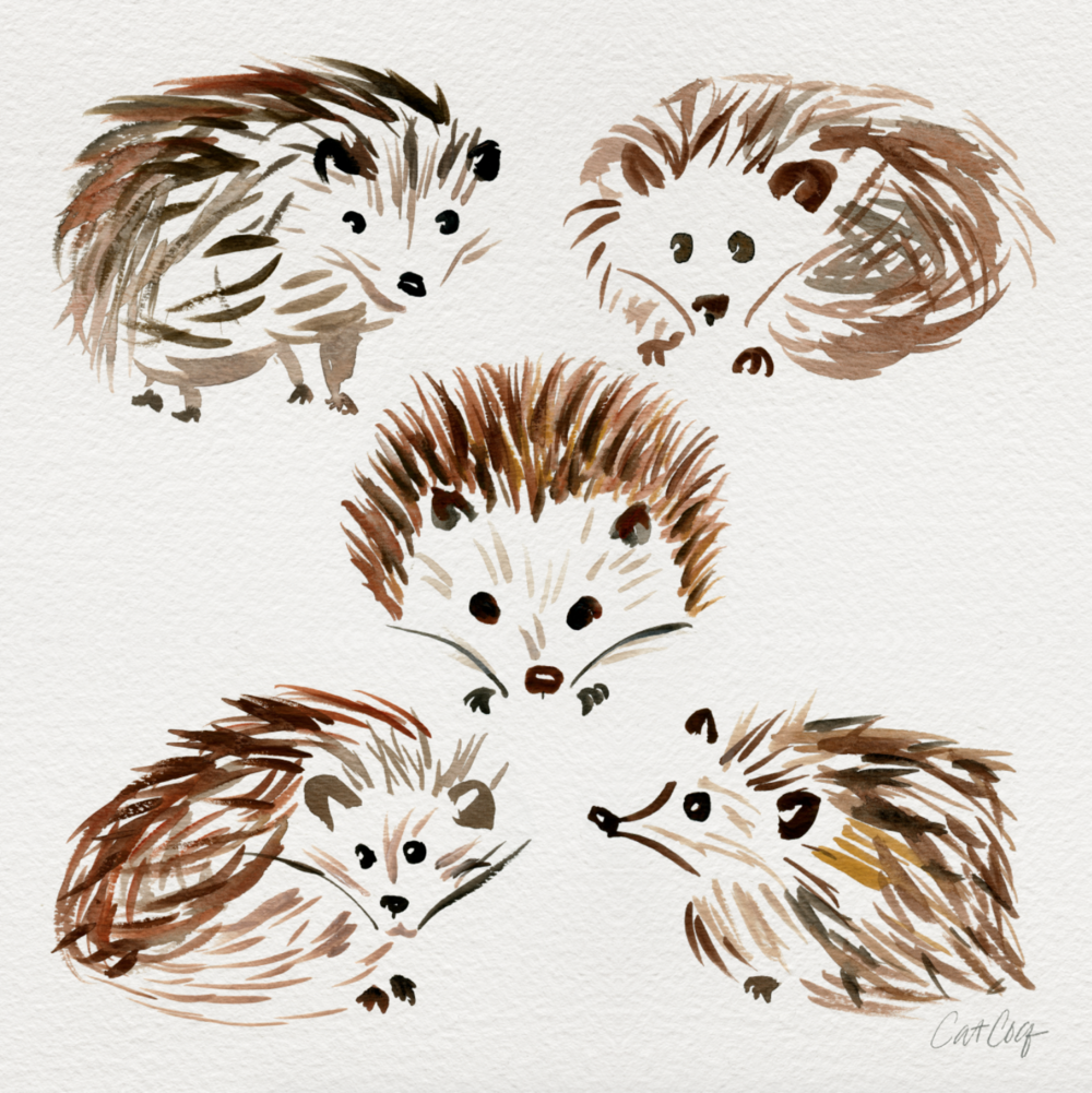 Hedgehogs available  here .