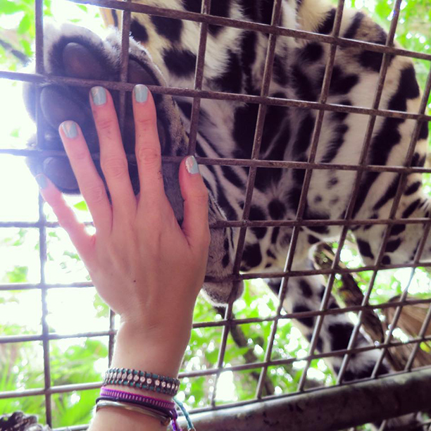 Coolest high-five of my life: Jaguar!
