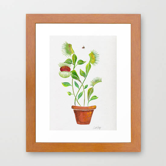 Venus Fly Trap  •  framed print in pecan $35–$135