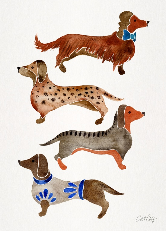 Dachshunds available  here .