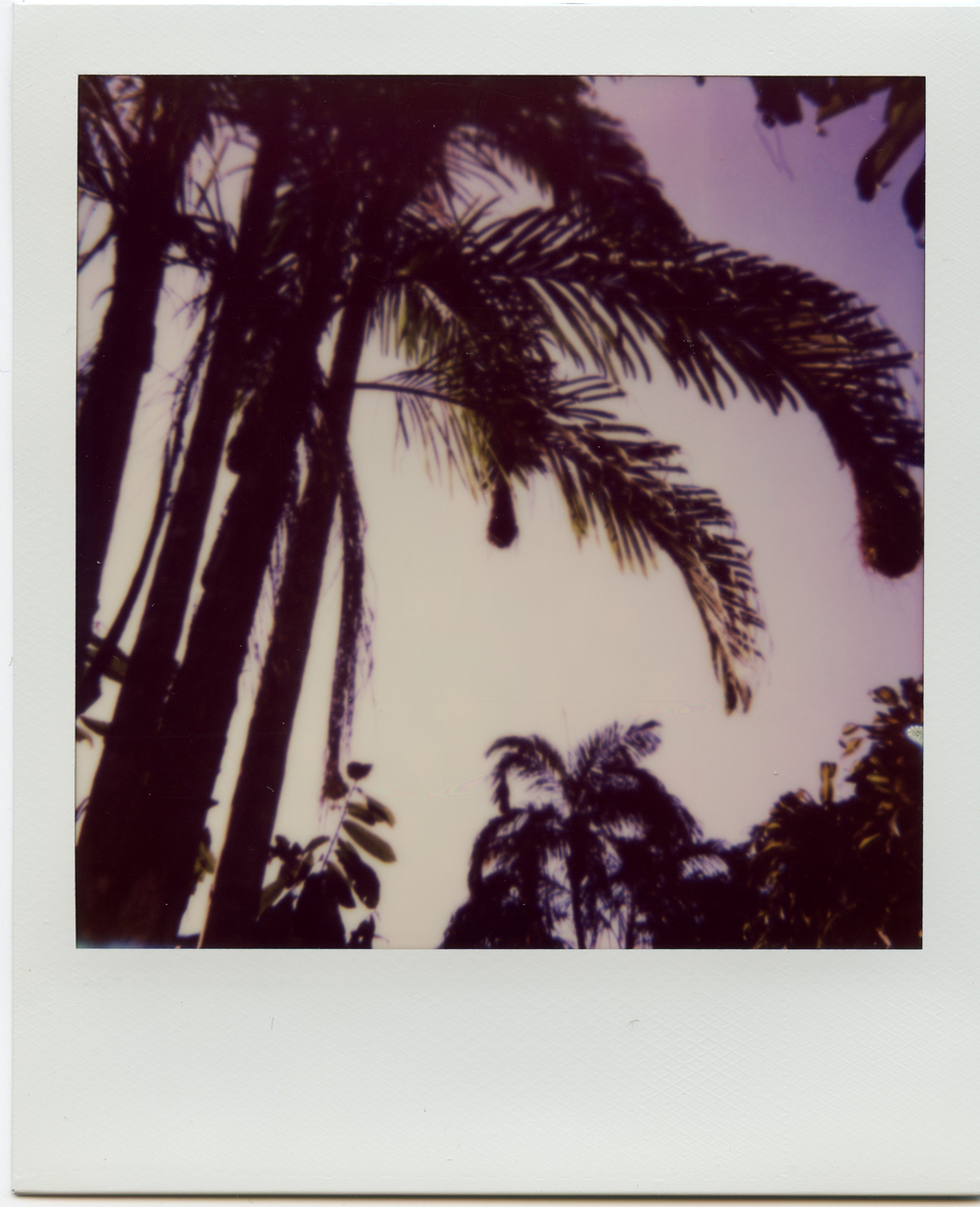 Polaroid-Amazon-4.jpg