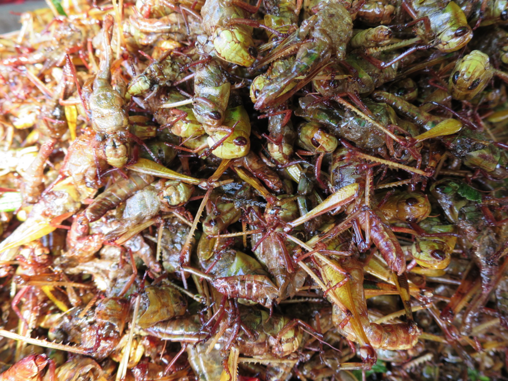 Seasoned grasshoppers