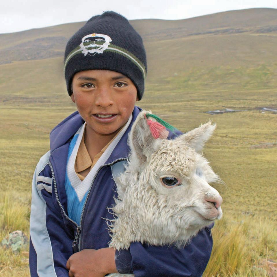 Gift an alpaca.
