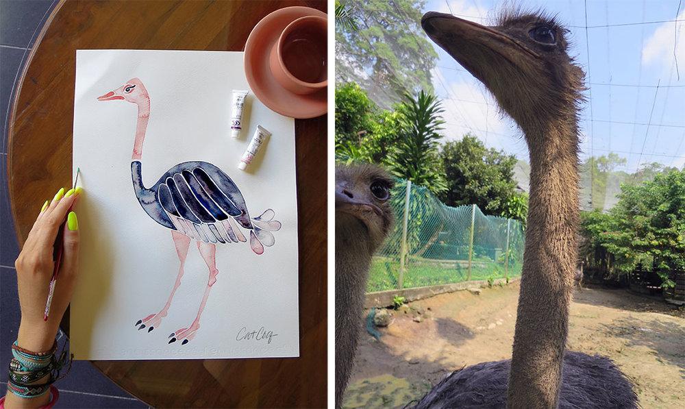 Ostrich-travel.jpg