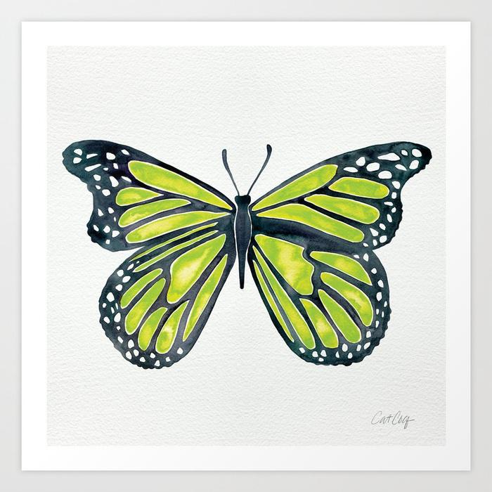 lime-butterfly-qj2-prints.jpg