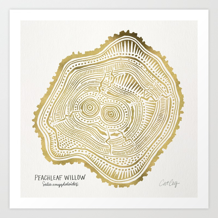 peachleaf-willow--gold-tree-rings-prints.jpg
