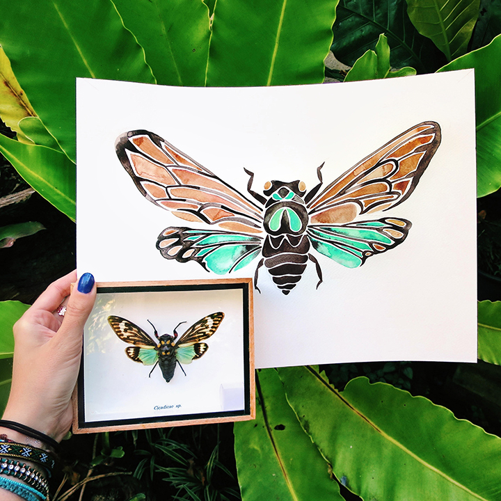 Cicada-Thai.jpg