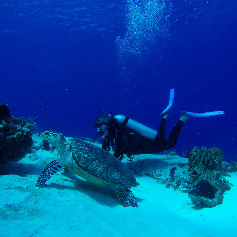 SeaTurtle-CatDiving.jpg