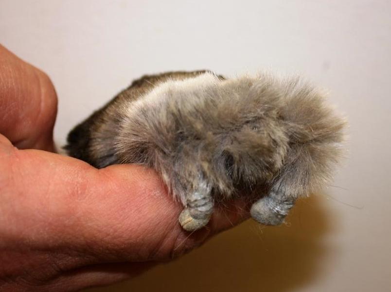 Miniature Mammal