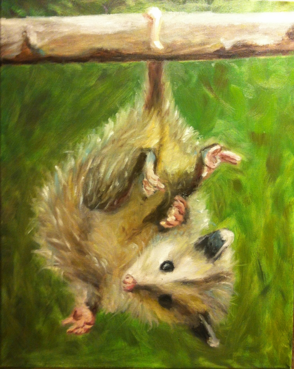 Opossum for the Nest