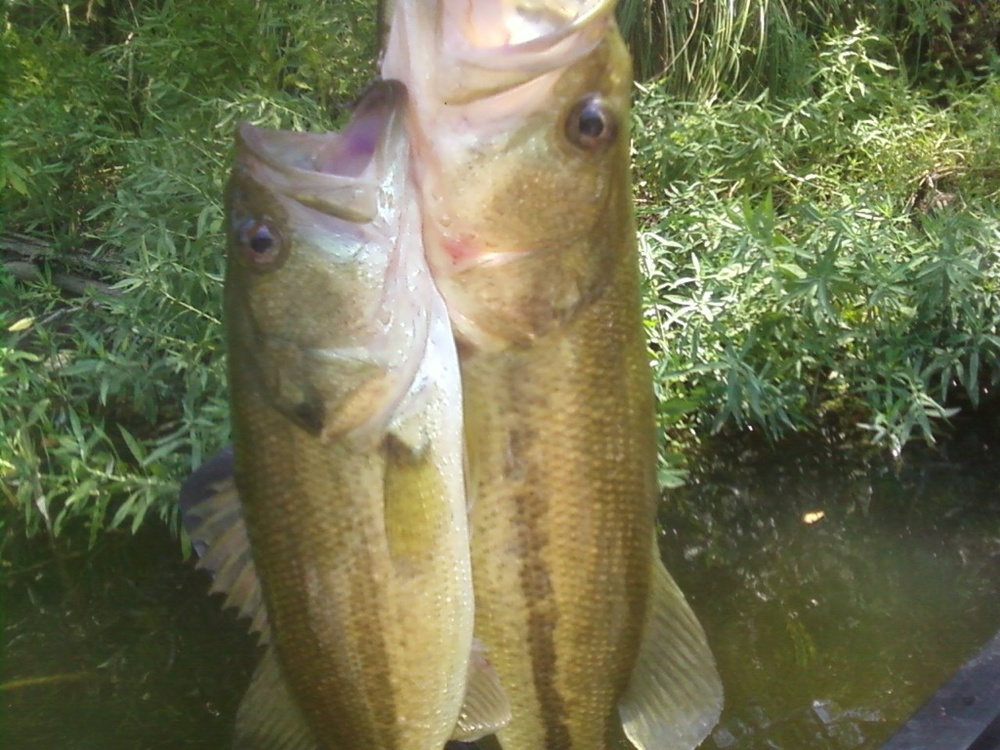 Two Bass on One lure