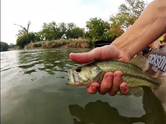 Largemouth Bass, Pecan Bayou, Brownwood, Texas