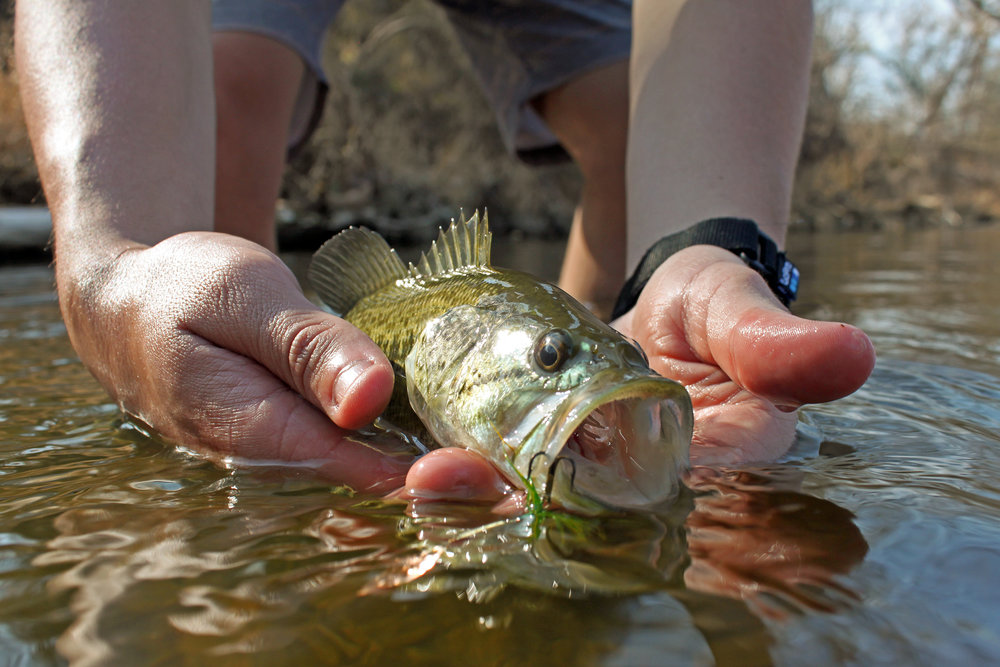 Brazos River Spotted Bass