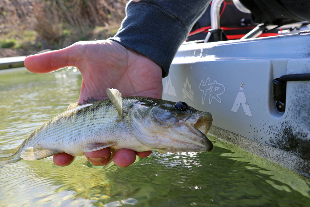 Guadalupe Bass South Llano River