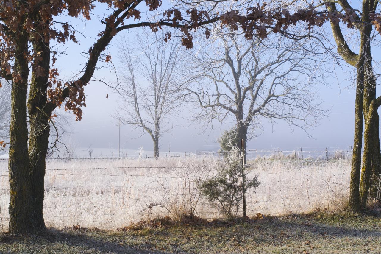 Morning frost in Ozark, Missouri. December, 2013.