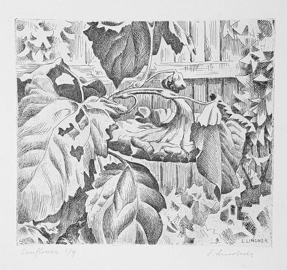 """Ernest Lindner, """"Sunflower (ed 1/9)"""", EL733, c. 1940, Etching on paper, 7 3/4"""" x 9"""""""