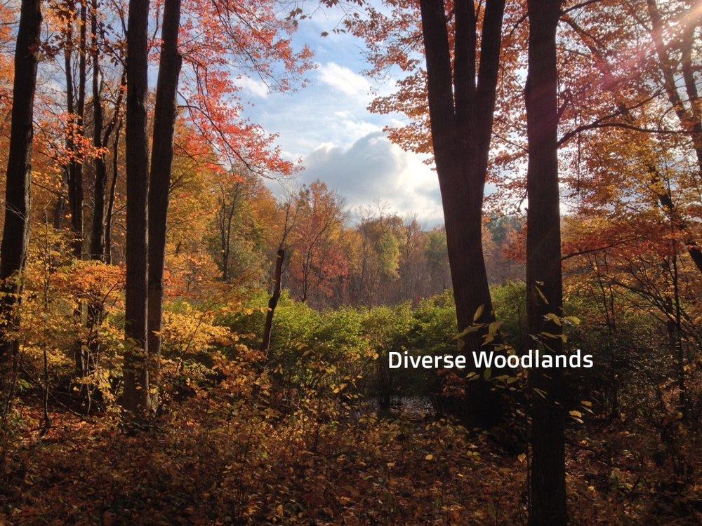 Fall Woods ideal.JPG