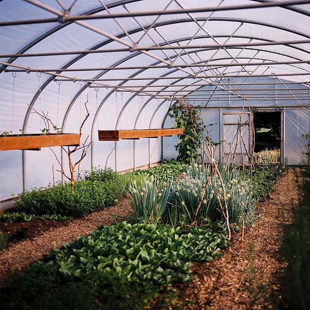 love this place. great hosts. awesome greenhouses and amazing barley. . . portra 160, rolleiflex hy6.2