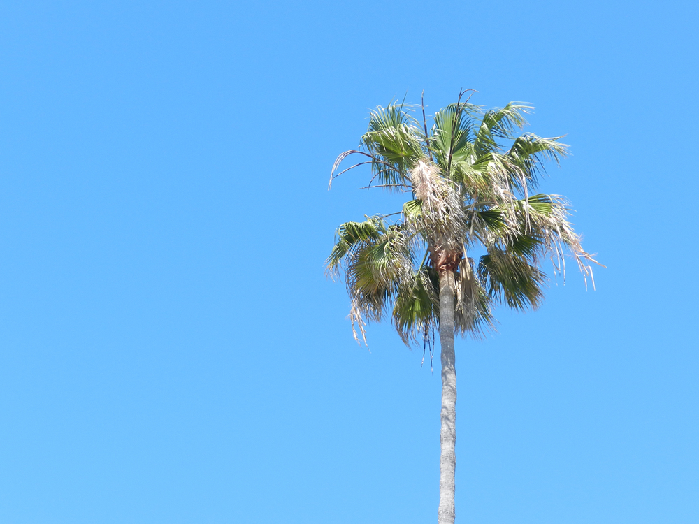 palm-in-the-wind