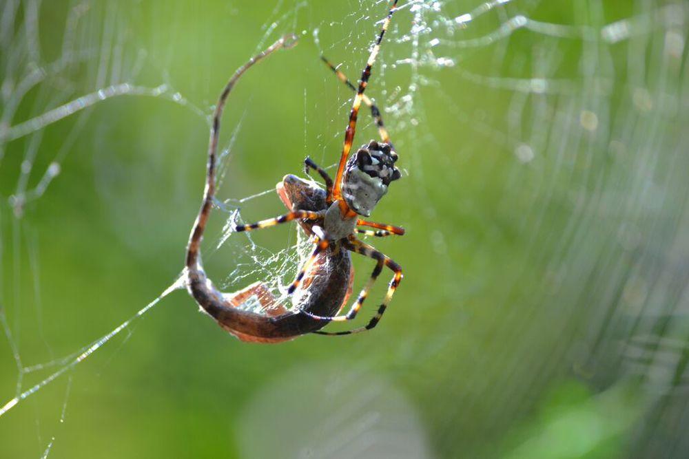 Spider+Lizard