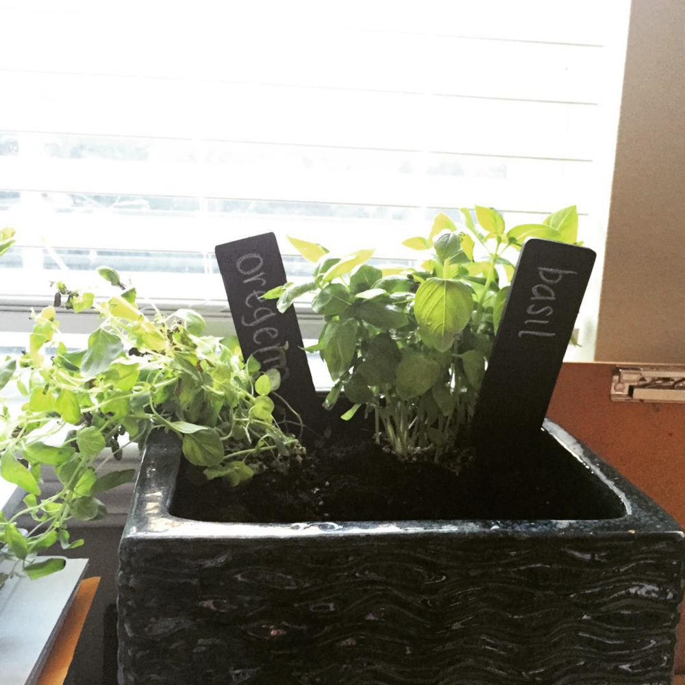 original apartment herb garden