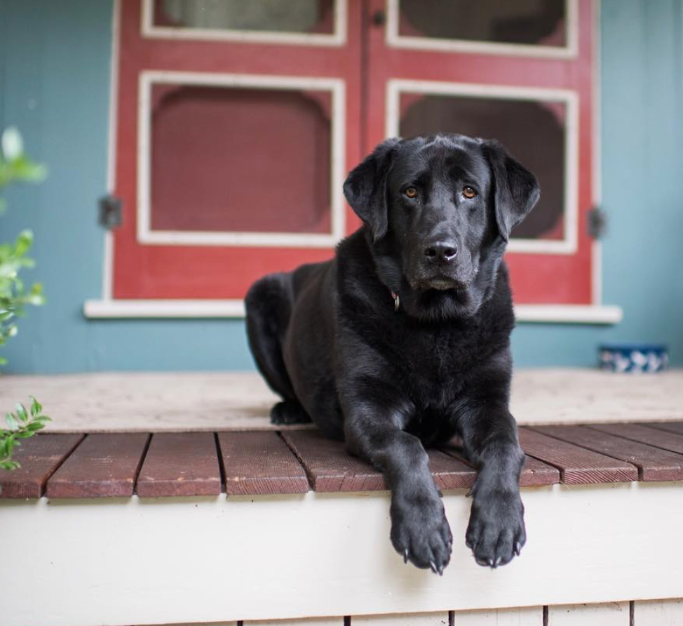 pc: The Dogist
