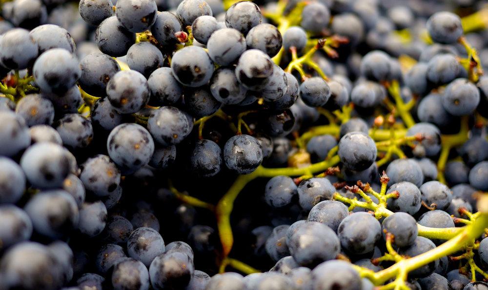 Jeffers_InfiniteMonkeyTheorem_Grapes