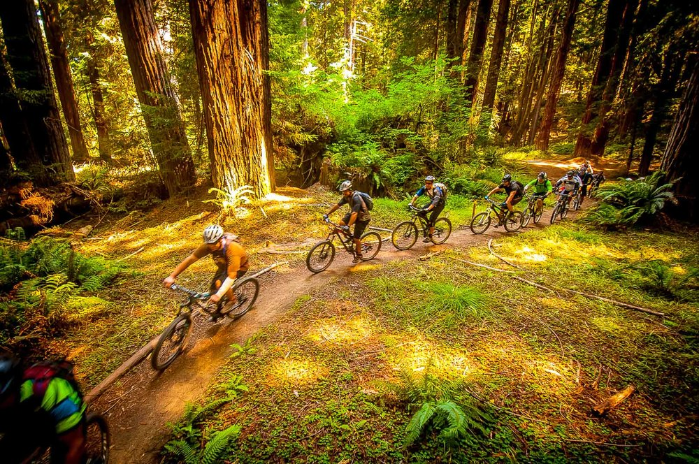 Mountain Bike San Francisco Marin guided mountain bike tours group ride