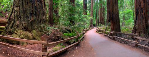 Muir Woods hiking tour Marin County Mountain Bike Tours