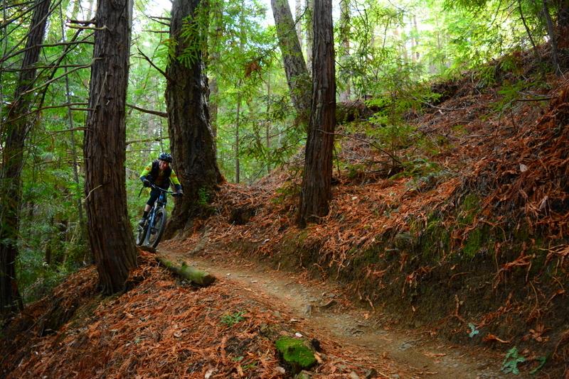 Marin Trail 3.JPG