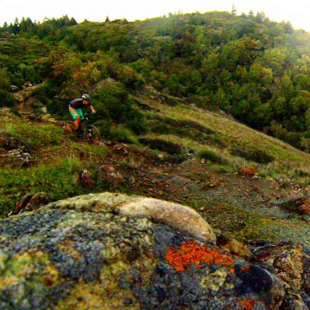 Marin Trail 2.JPG