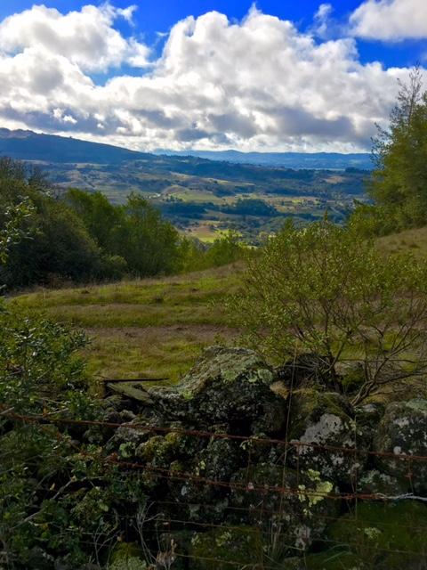 Sonoma View.jpg
