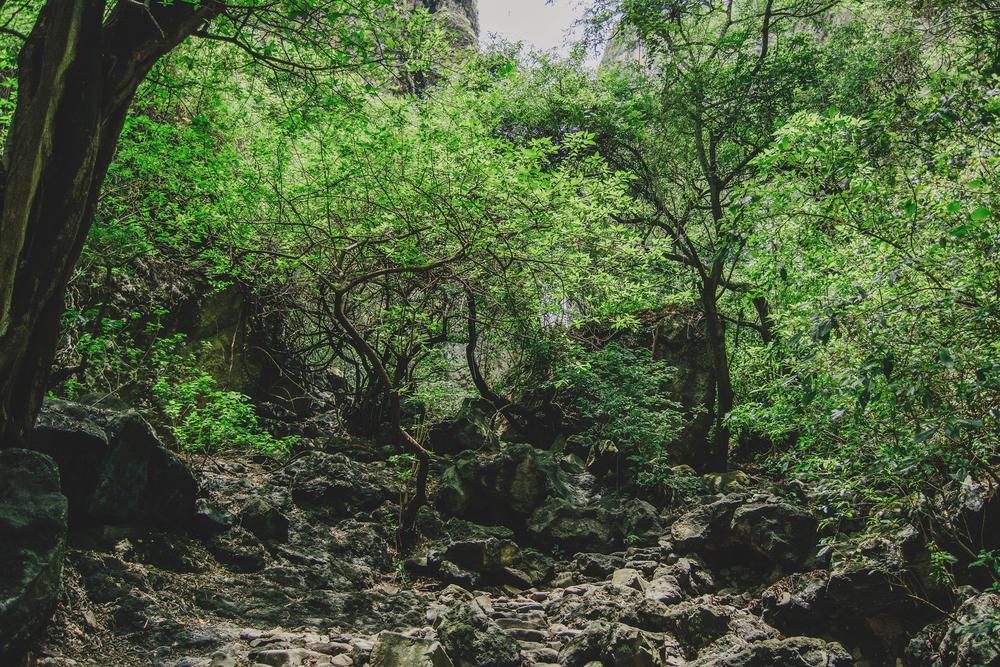 Mary Ro+Luis Carlos Mexican Morelos Hills Photoshoot (16).jpg