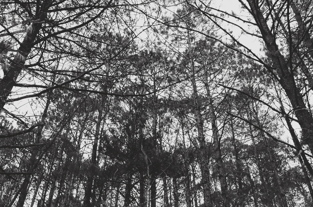 Rodi+Amelie Stone Valley Engagement (45).jpg
