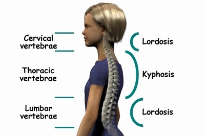 lordosis-kyphosis-best-of-normal-spinal-curves-of-lordosis-kyphosis.jpg
