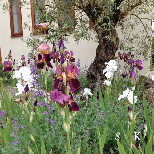 Garden Design Newquay