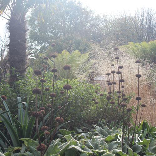 Garden Designer - Cornwall
