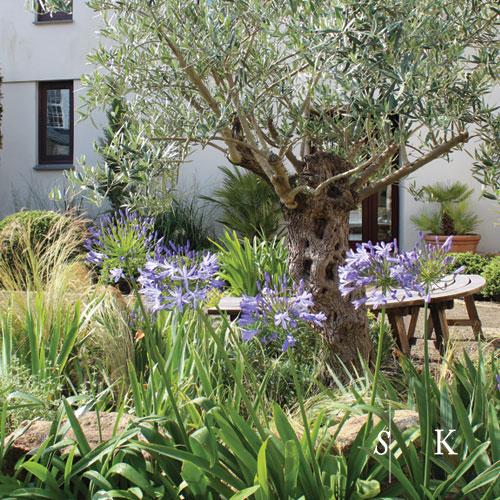 SK_Cornish-Mediterranean Garden 03.jpg