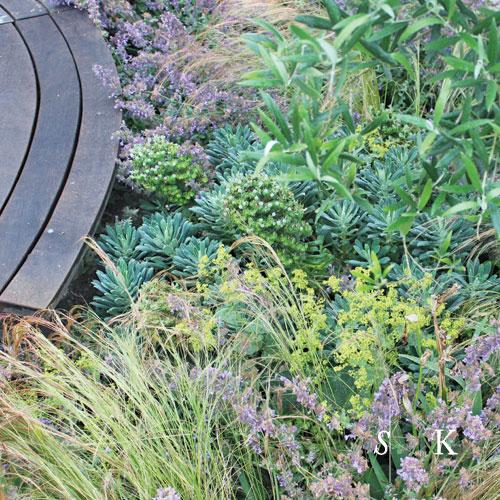 SK_Cornish-Mediterranean-Garden-05.jpg