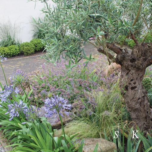 SK_Cornish-Mediterranean-Garden-04.jpg